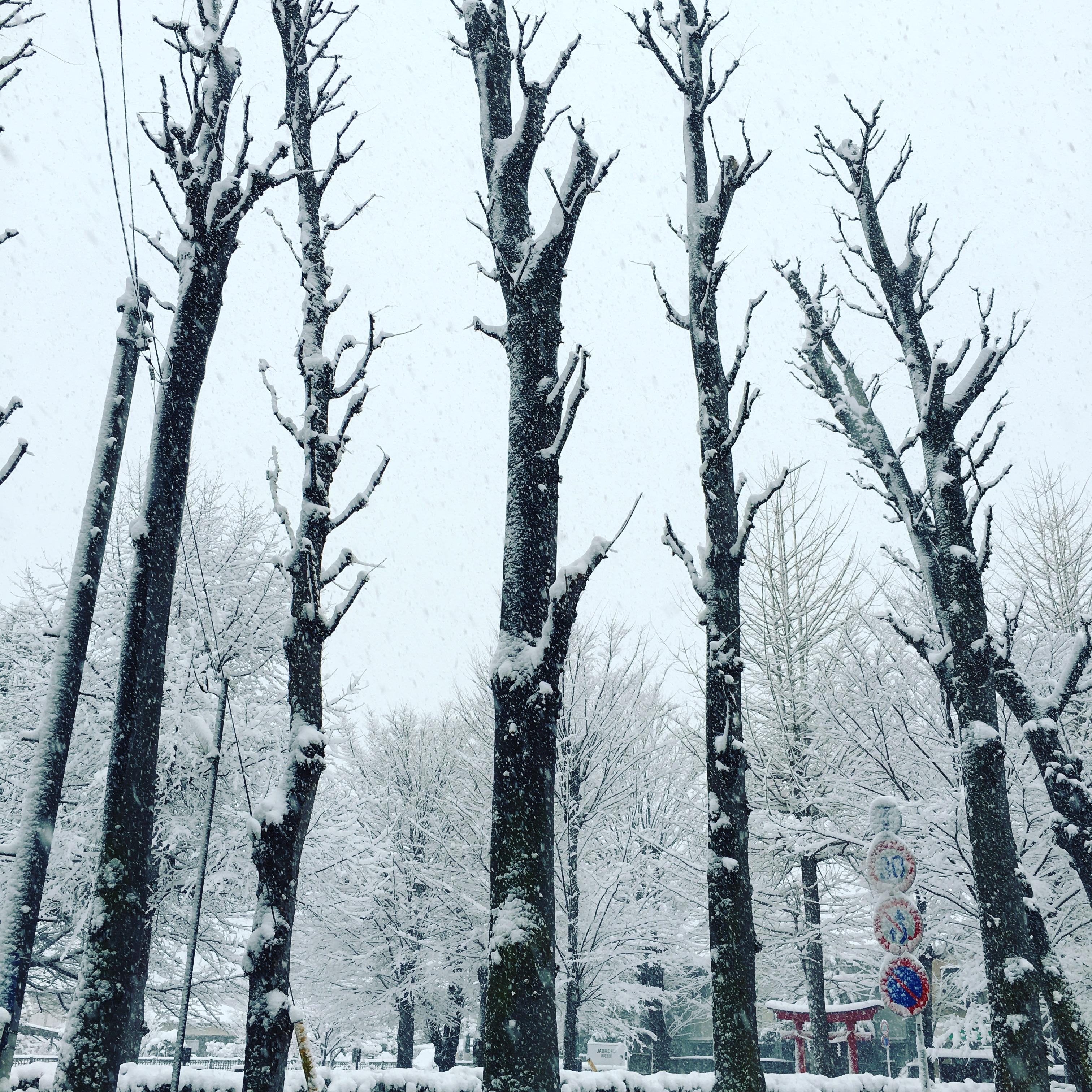 ☃️雪☃️